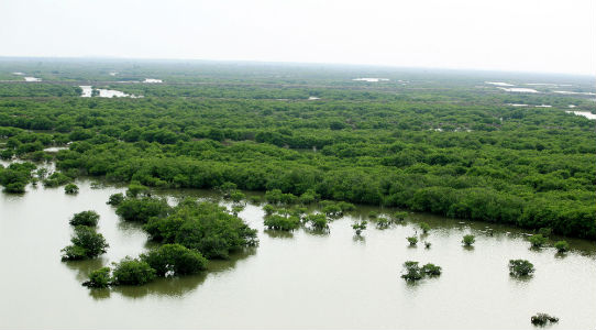 mangrove_ecosystems_in_shrimp_pond