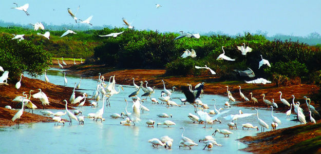 birds_yard_of_xuan_thuy_national_park